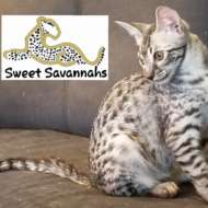 SweetSavannahs
